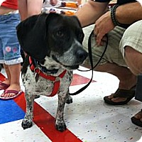 Adopt A Pet :: Mindy - Omaha, NE