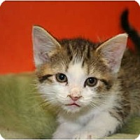 Adopt A Pet :: BECKY - SILVER SPRING, MD