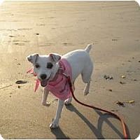 Adopt A Pet :: Ali - Pending! - kennebunkport, ME