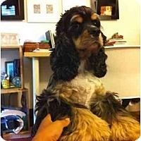 Adopt A Pet :: Cisco - Tacoma, WA