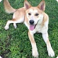Adopt A Pet :: Timber - Inverness, FL