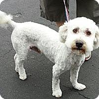 Adopt A Pet :: Patterson - Phoenix, AZ