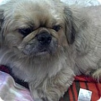 Adopt A Pet :: Mojo - Portland, ME