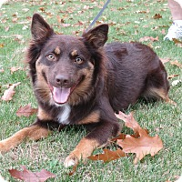 Adopt A Pet :: Rosie - Elk River, MN