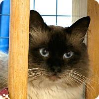 Adopt A Pet :: Nathaniel - Davis, CA
