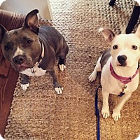 Adopt A Pet :: Cha Cha - Atlanta, GA