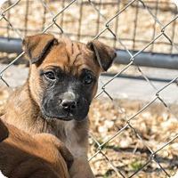 Adopt A Pet :: Fred $250 - Seneca, SC