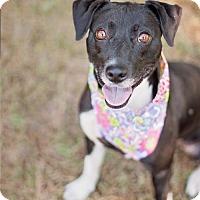 Adopt A Pet :: Belle #4 - Lafayette, LA