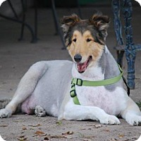 Adopt A Pet :: Falcon *New* - Stafford, TX