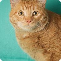 Adopt A Pet :: Foreman - Gilbert, AZ