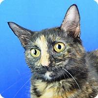Adopt A Pet :: Dreamer - Carencro, LA