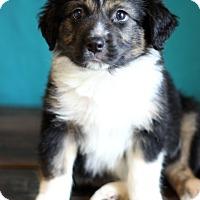 Adopt A Pet :: Sega - Waldorf, MD