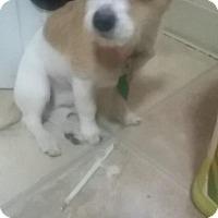Adopt A Pet :: Justin - staten Island, NY