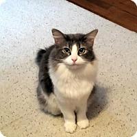 Adopt A Pet :: Sasha - Jeannette, PA