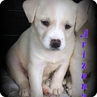 Adopt A Pet :: Arizona - Denver, NC