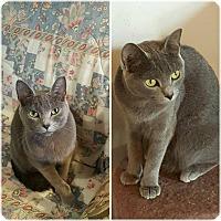 Adopt A Pet :: Indigo - Ocala, FL