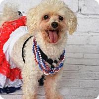 Adopt A Pet :: April - Titusville, FL