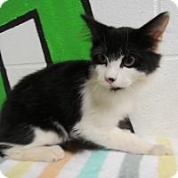 Adopt A Pet :: 16C-1296 (10/16) - Rome, GA