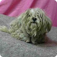 Adopt A Pet :: URGENT 10/24 @DEVORE - San Bernardino, CA