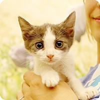 Adopt A Pet :: Luna Lovegood - Baytown, TX