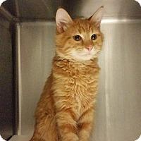 Adopt A Pet :: Mickey - Idaho Falls, ID