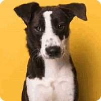 Adopt A Pet :: Freddy - Fort Collins, CO