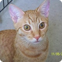 Adopt A Pet :: Jerry - Tucson, AZ