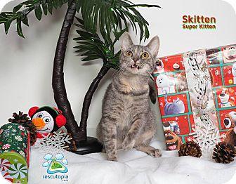 Domestic Shorthair Cat for adoption in Baton Rouge, Louisiana - Skitten