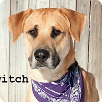 Adopt A Pet :: Twitch - Hamilton, MT