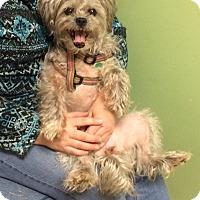 Adopt A Pet :: Mingki - Lawrenceville, GA