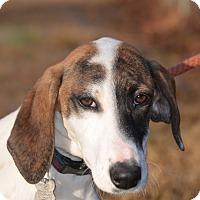 Adopt A Pet :: Molly - Sparta, NJ