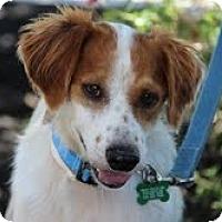 Adopt A Pet :: AR/Mingo - Brewster, MA