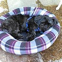 Adopt A Pet :: Lenny - Gig Harbor, WA