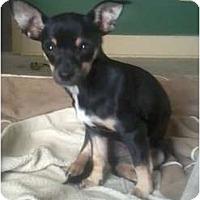 Adopt A Pet :: Lopez - Hilliard, OH