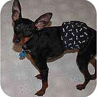 Adopt A Pet :: Xandro - Minneapolis, MN