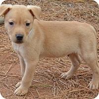Adopt A Pet :: Marley - Athens, GA