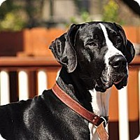 Adopt A Pet :: Zeus - Virginia Beach, VA