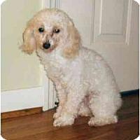 Adopt A Pet :: Mel - Mooy, AL