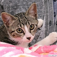 Adopt A Pet :: Kelly - Westchester, CA
