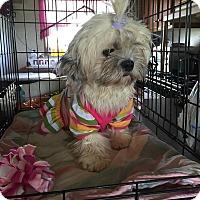 Adopt A Pet :: Darby - Homer, NY