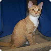 Adopt A Pet :: Priscilla - Colorado Springs, CO
