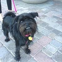 Adopt A Pet :: Halo - Phoenix, AZ
