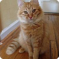 Adopt A Pet :: Ripley (Has Application) - Washington, DC