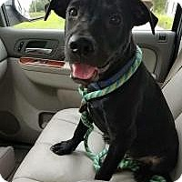 Adopt A Pet :: Henry - Uxbridge, MA