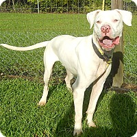 Adopt A Pet :: Winston - Newport, NC