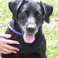 Adopt A Pet :: Clover - Purcellville, VA