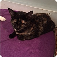 Adopt A Pet :: Louise - Ashland, OH
