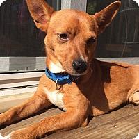 Adopt A Pet :: Knox - Warrenville, IL