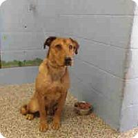 Adopt A Pet :: URGENT ON 10/22 San Bernardino - San Bernardino, CA