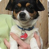 Adopt A Pet :: Calliope - Menomonie, WI